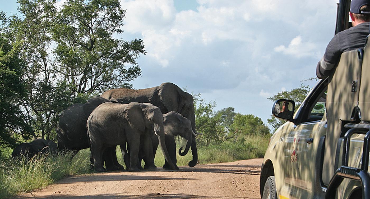 Krugerpark Game Drive olifanten