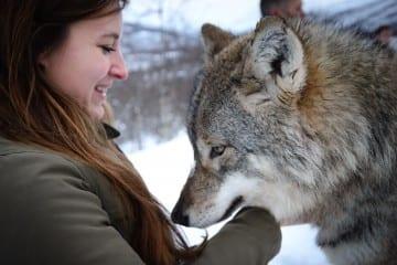 Kus Wolf Polar Park Noorwegen