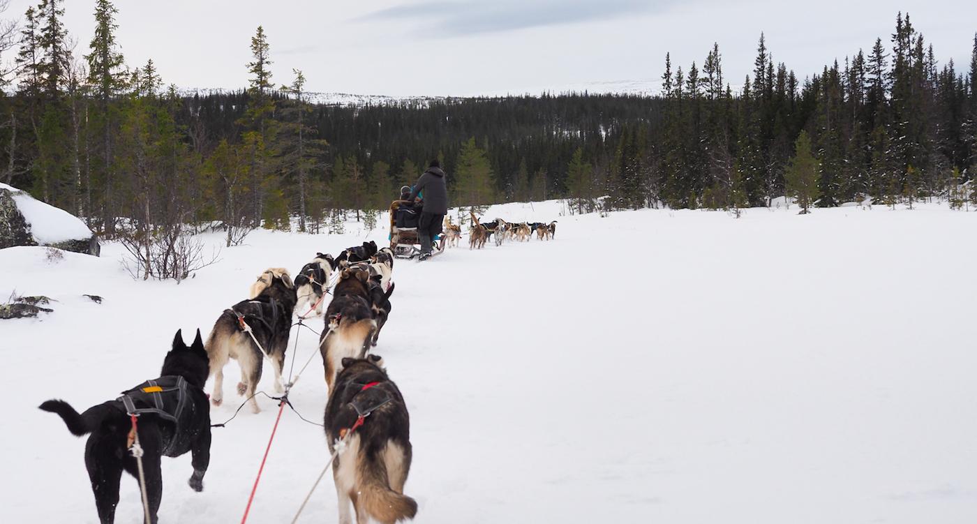 Lapland activiteiten