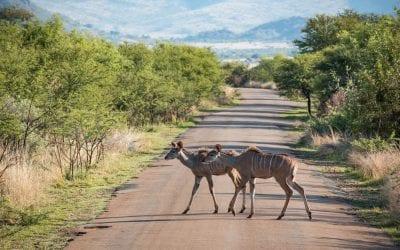Limpopo Zuid-Afrika