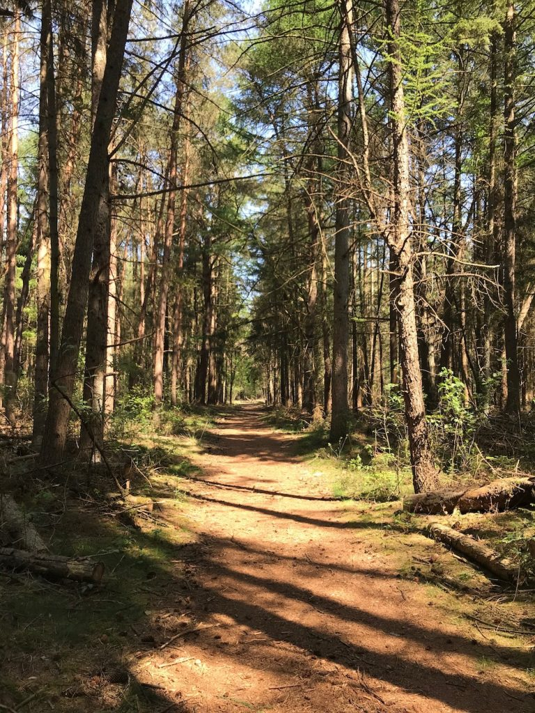 Loons en Drunense duinen bos
