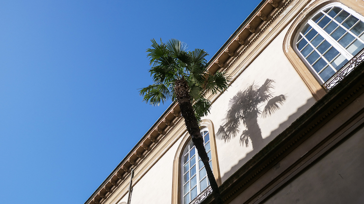 Lucca palmbomen italie
