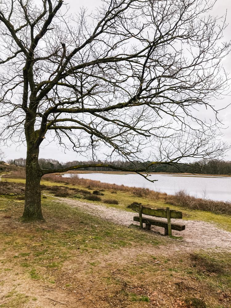 Maasduinen limburg Bankje bij Reindersmeer