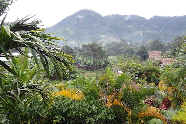 Madagascar jungle