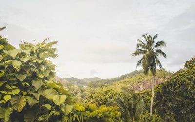 Mahe Seychellen regenwoud