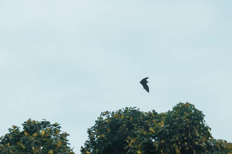 Mahe vakantie vleermuis Seychellen