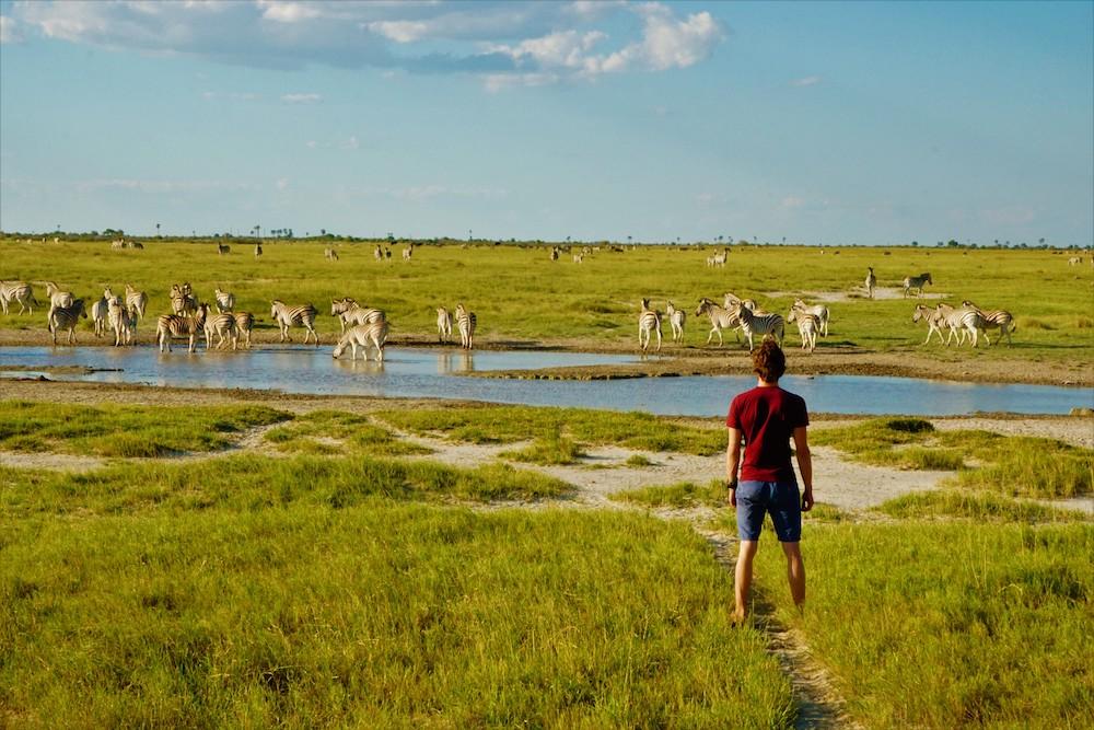Makgadikgadi zebra migratie Botswana