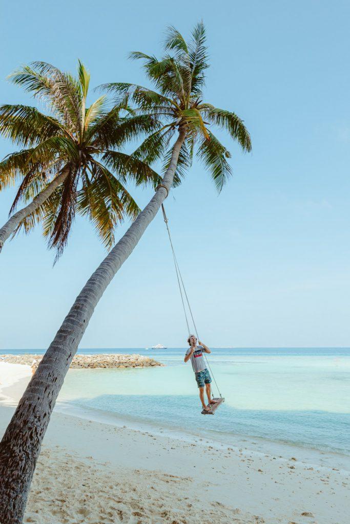 Malediven palmboom