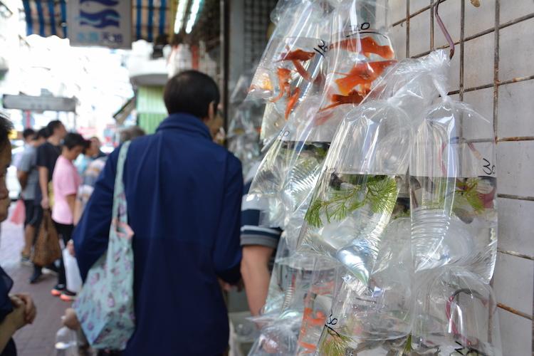 markten-in-hong-kong-bezienswaardigheden