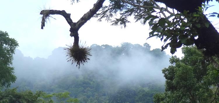 Mexico palenque jungle