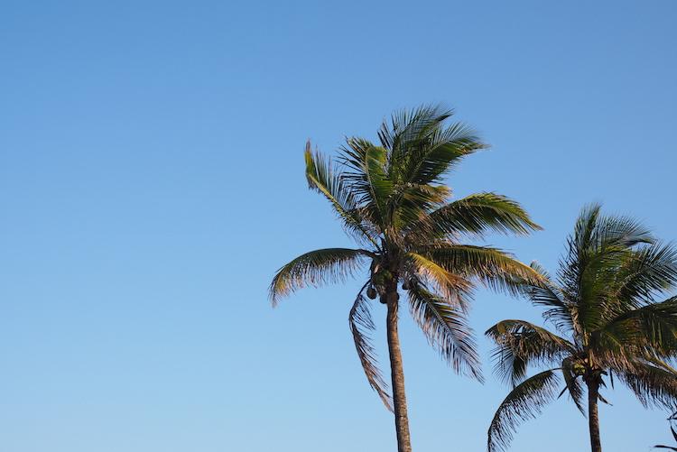 Vagabond motel palmbomen