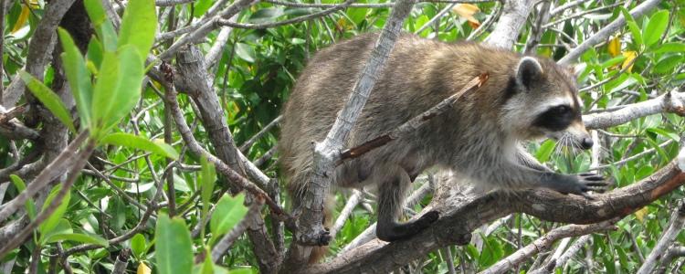 Miami tips dieren spotten