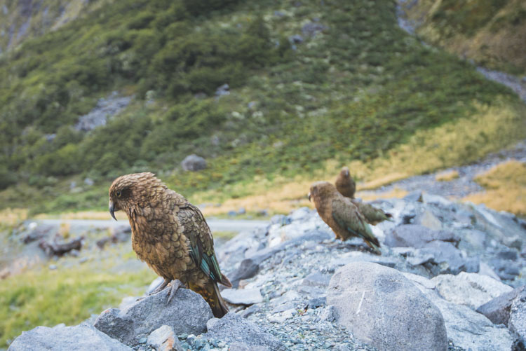 Milford Sound onderweg Nieuw Zeeland