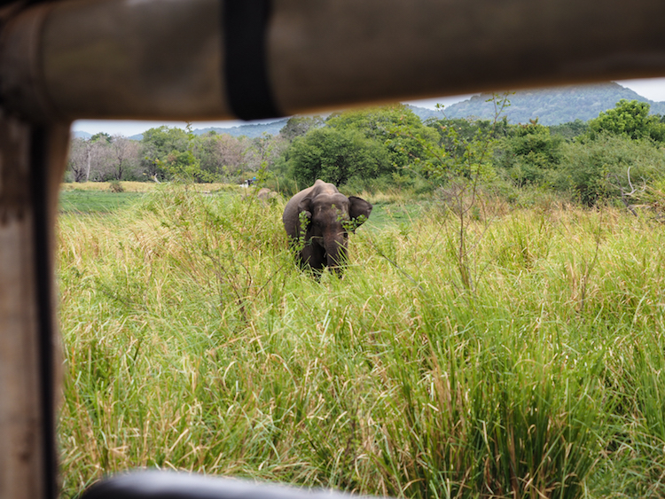 Minneriya-National-Park-olifant-vanuit-jeep