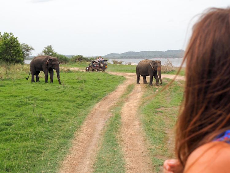 Minneriya national park wilde olifanten jeep safari