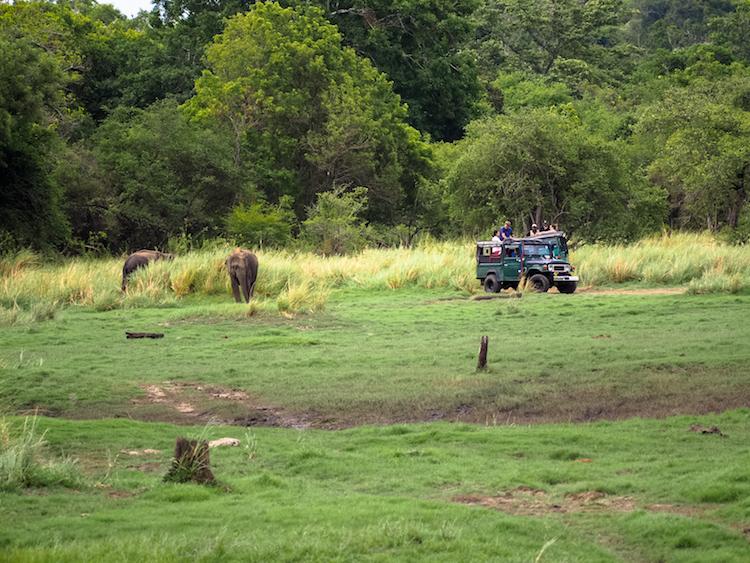 Minneriya national park wilde olifanten jeepsafari