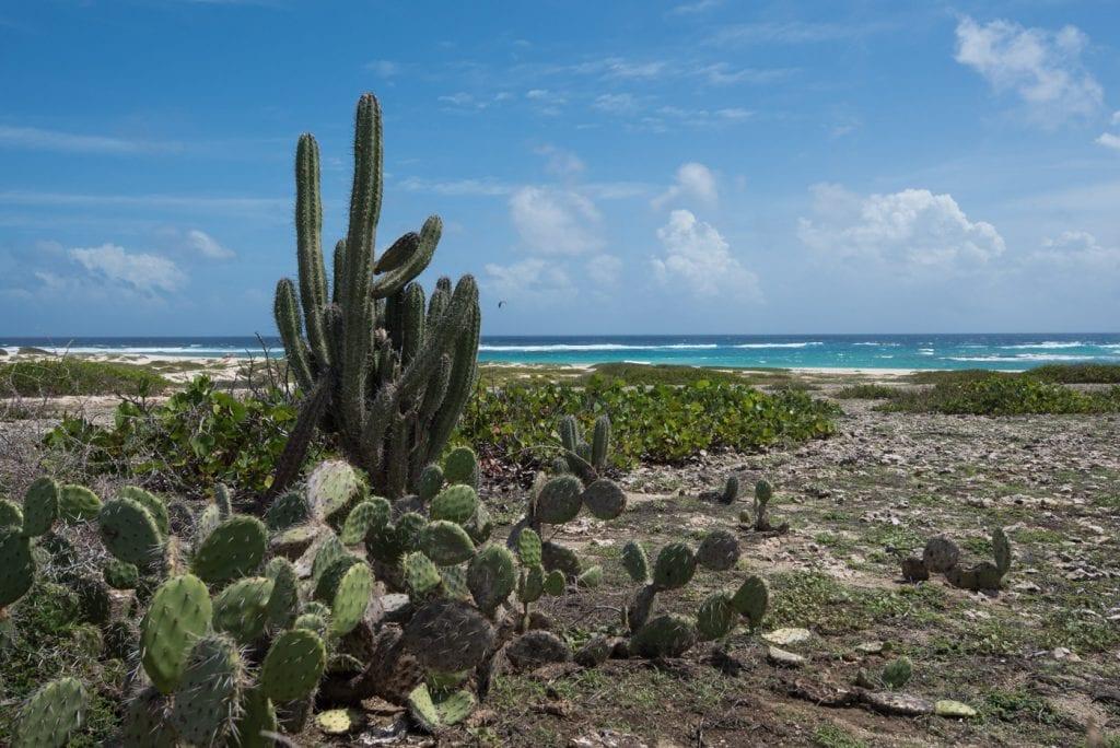 Mooiste stranden Aruba boca grandi
