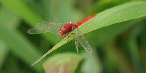Myanmar natuur