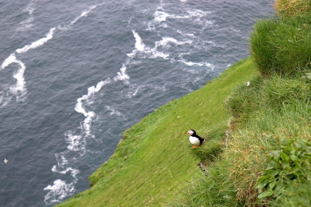 Mykines wildlife Faeröer Eilanden