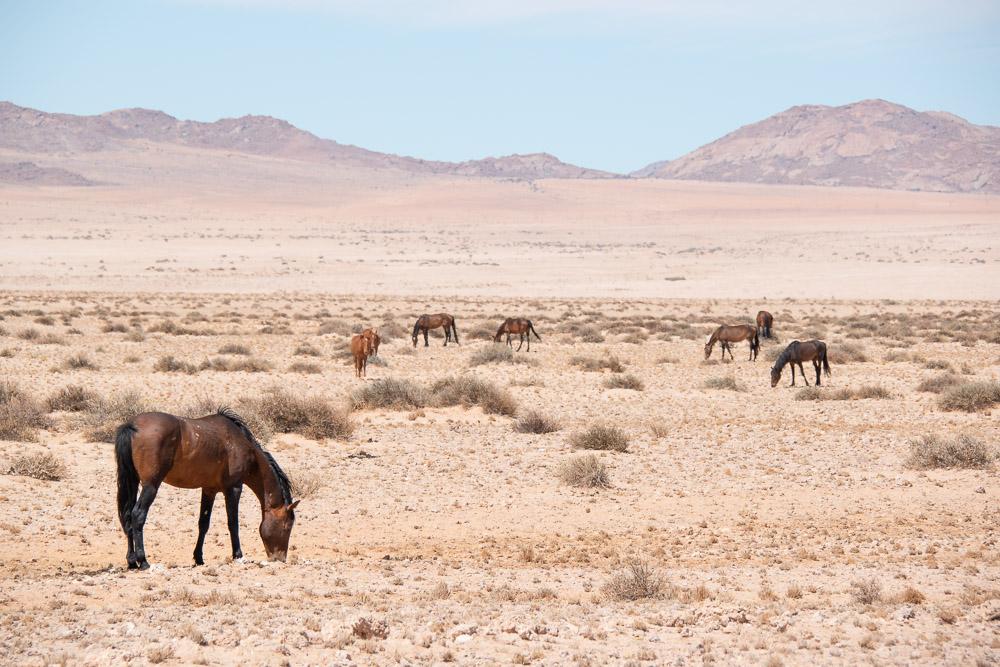 Namibie aus wilde paarden-2
