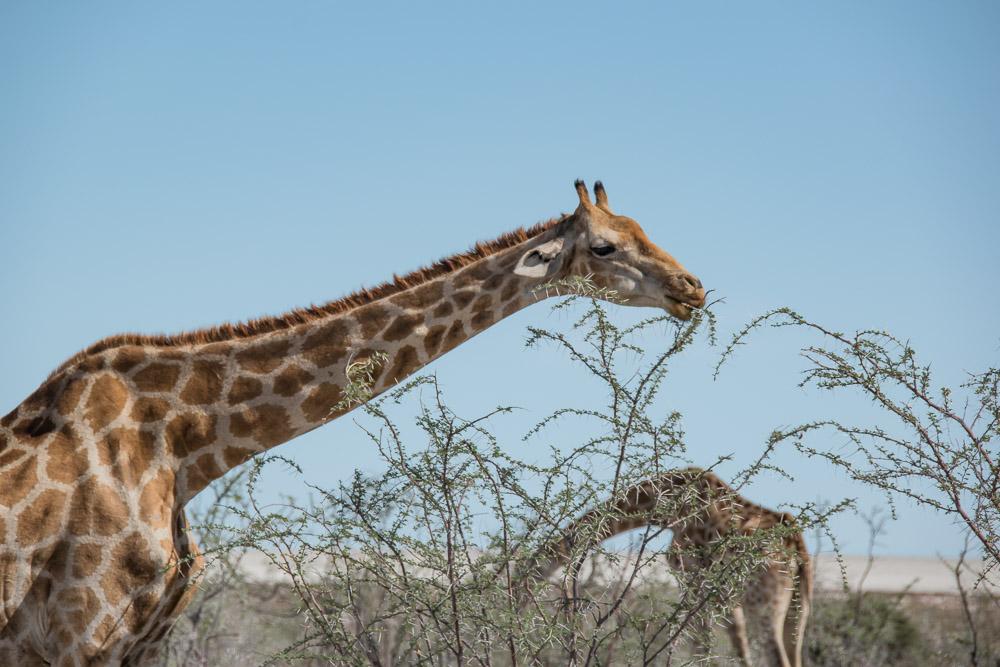 Namibie rondreis route Etosha national park