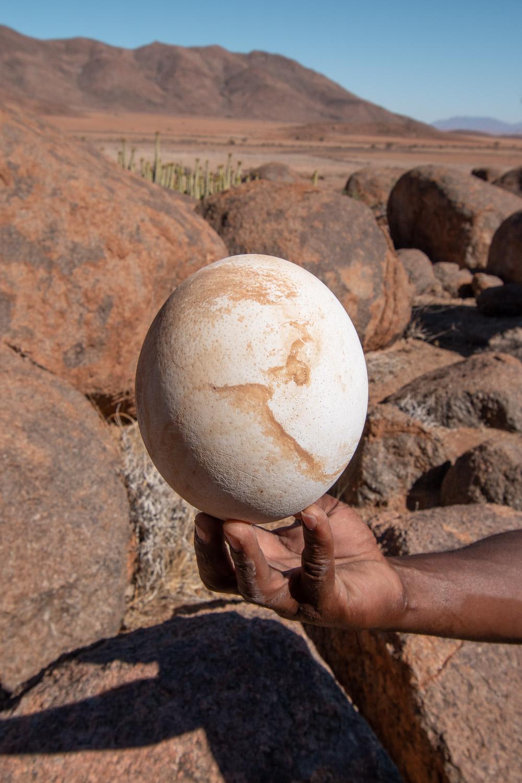 Namibie sonop morning drive struisvogel ei