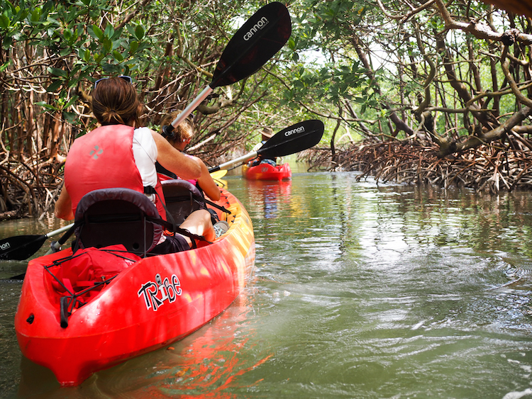 Naples Florida kayak tour