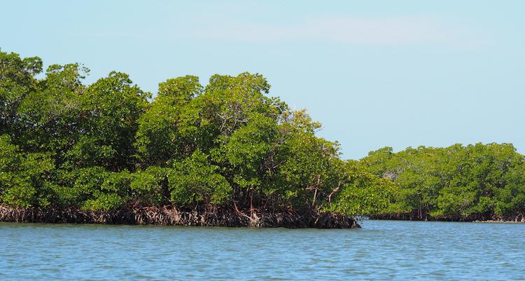 Naples Florida Marco Islands kayak tour