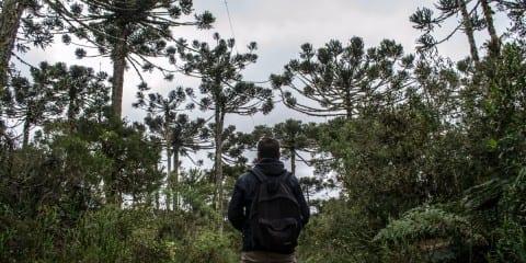 National park brazilie roadtrip