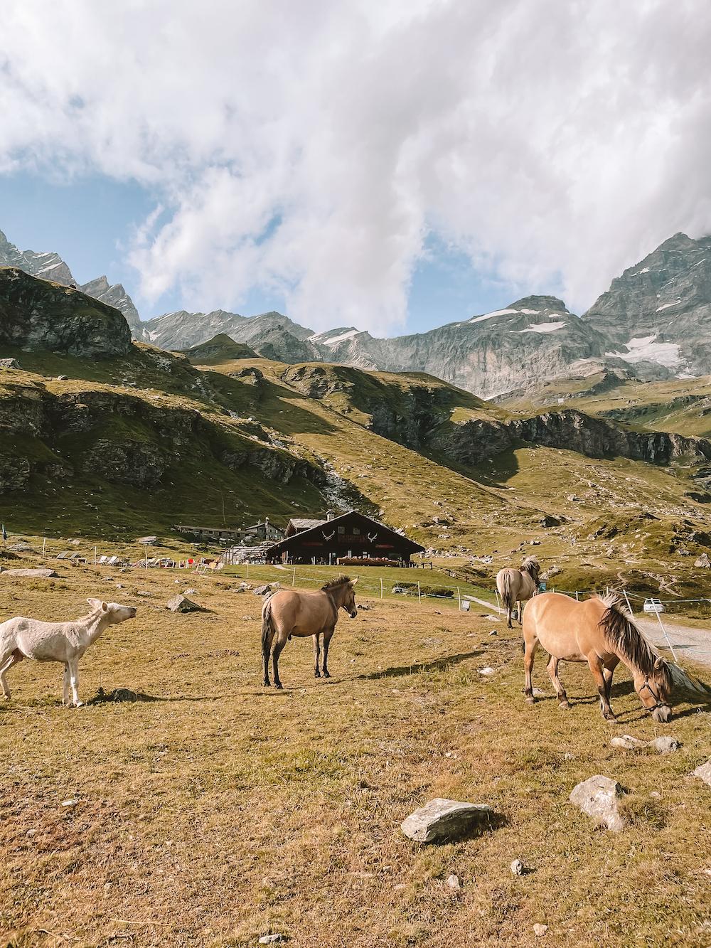 Natuur bij Breuil-Cervinia