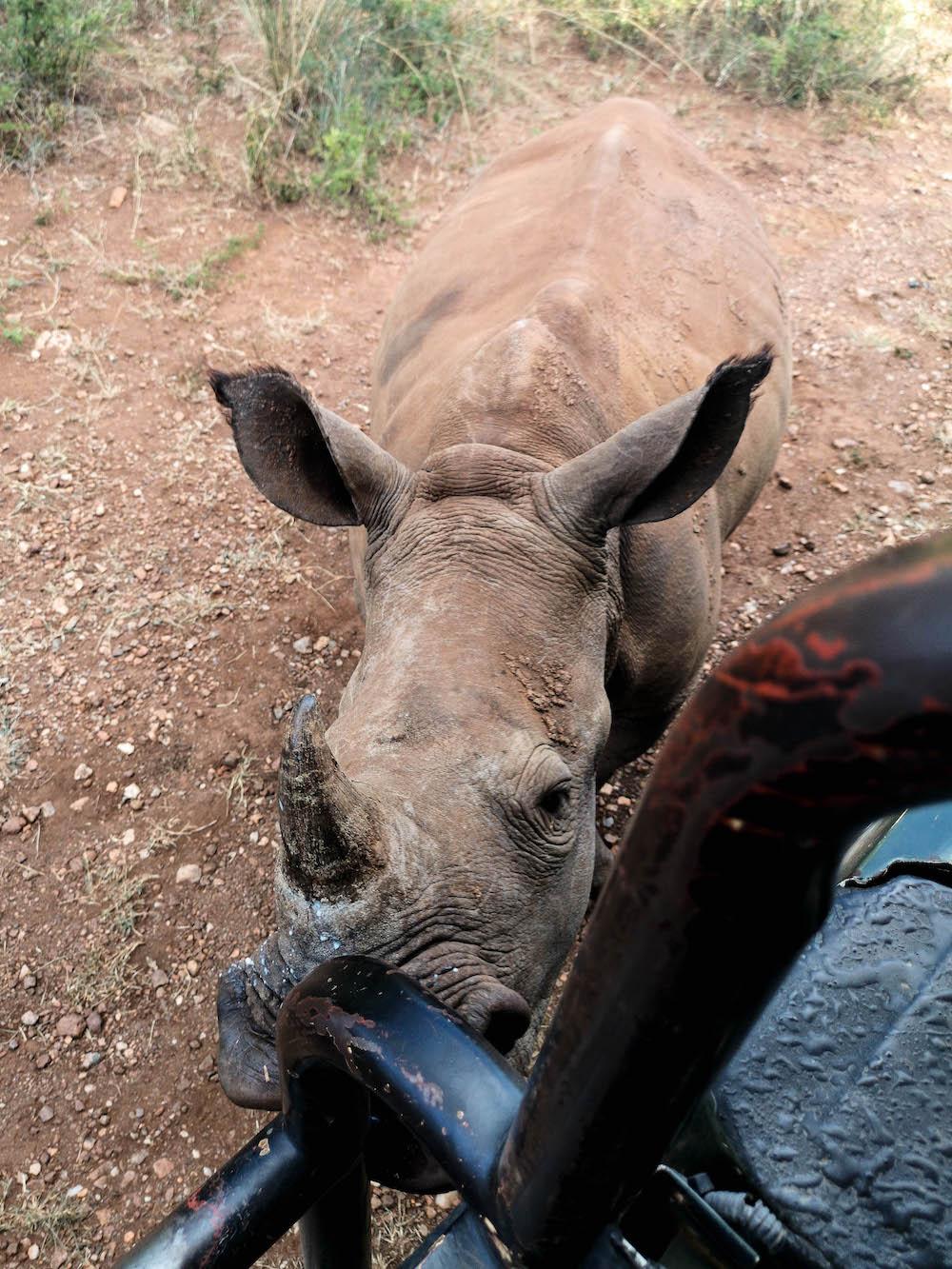 neushoorn safari zuid-afrika