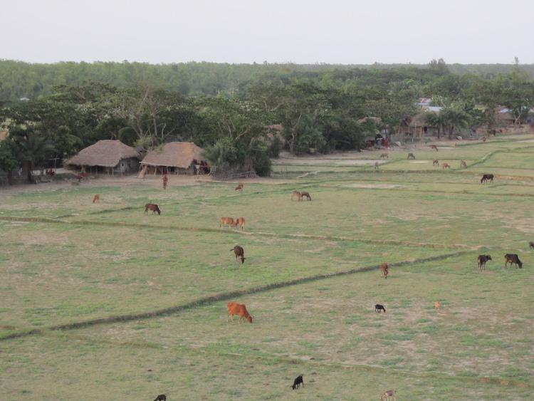 Nijum Dwip Bangladesh