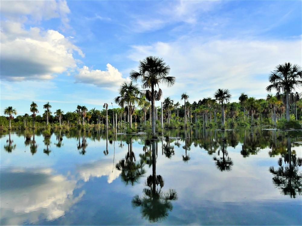 Noord pantanal in Brazilie