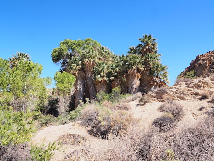 Oase joshua tree national park tips