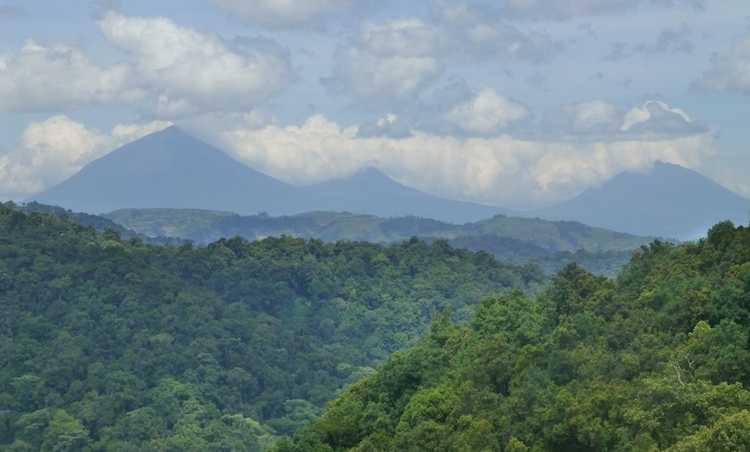 Oeganda regenwoud