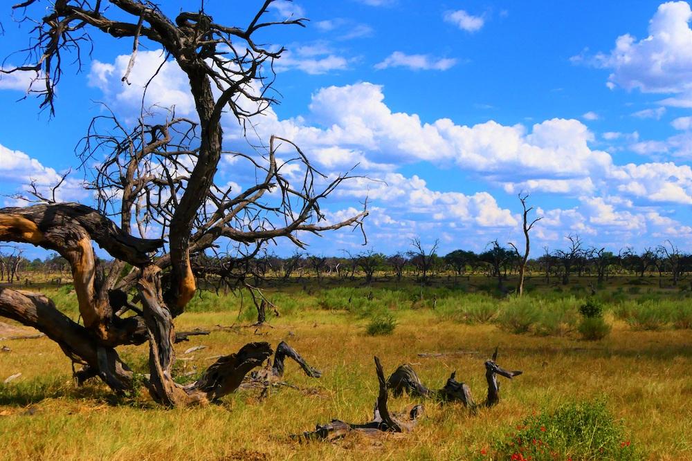 Okavango Delta Botswana uitzicht