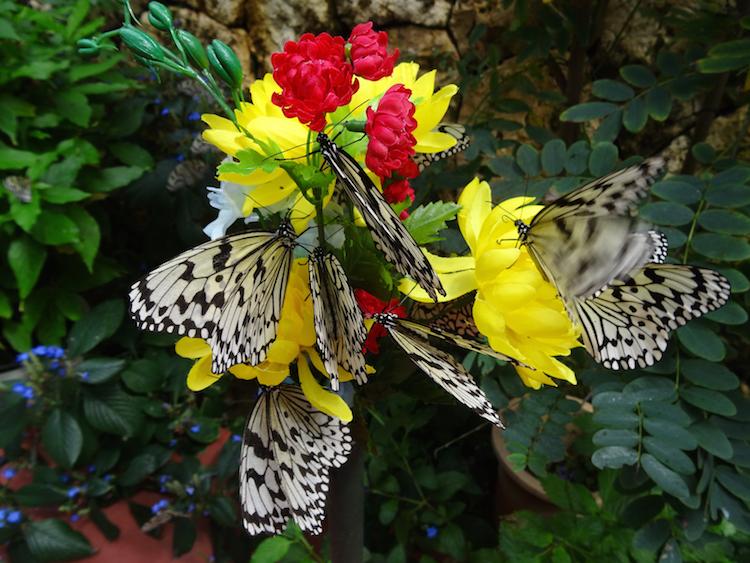 Okinawa-Japan-vlindertuin
