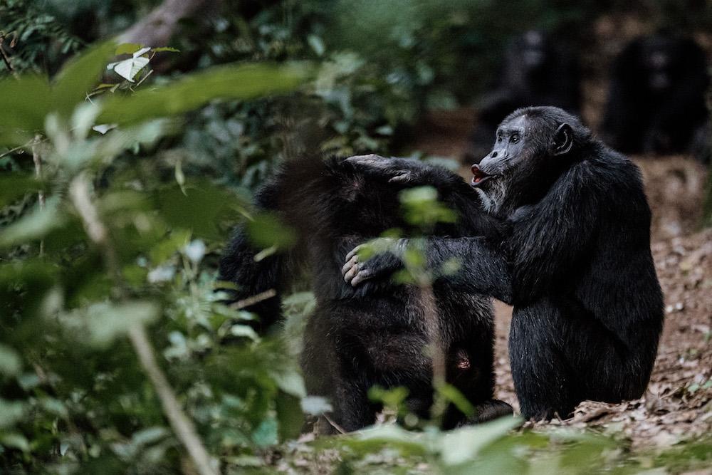 Op reis naar Rwanda dieren