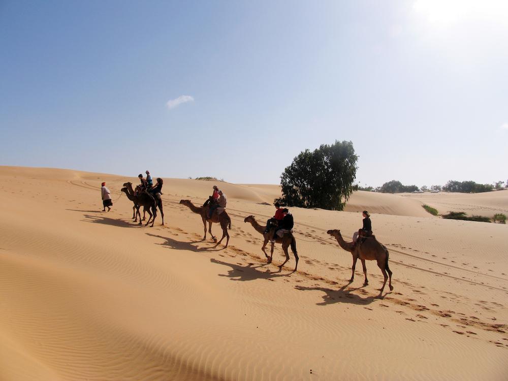 Op stap met de kamelen in Lompoul, Senegal