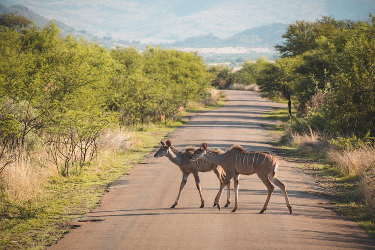 PIlanesberg Zuid Afrika-2