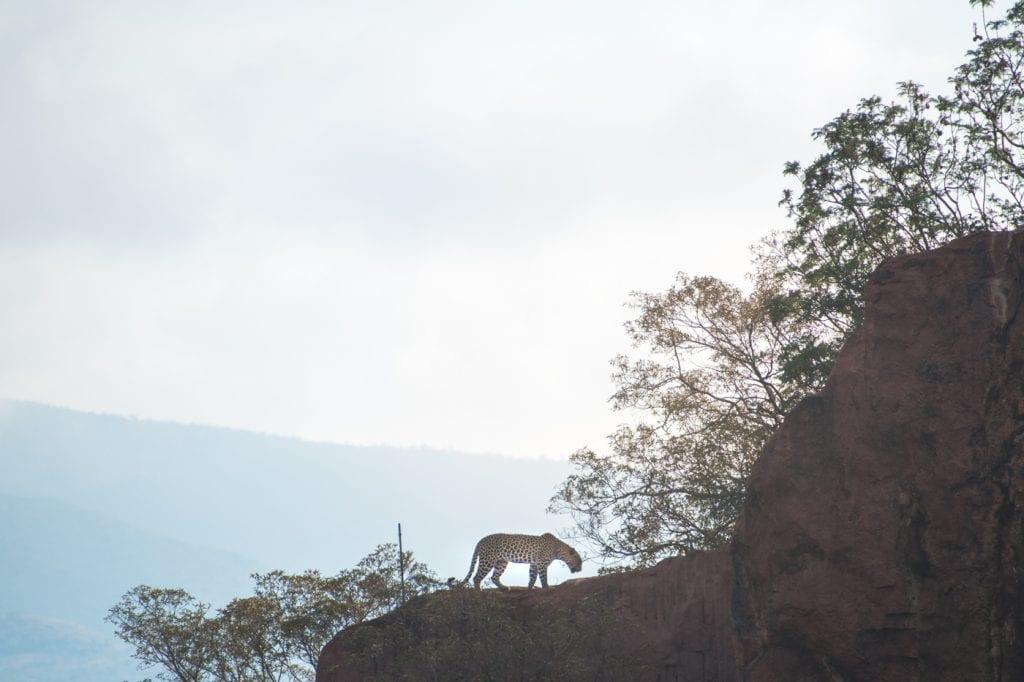PIlanesberg big five safari ivory tree lodge