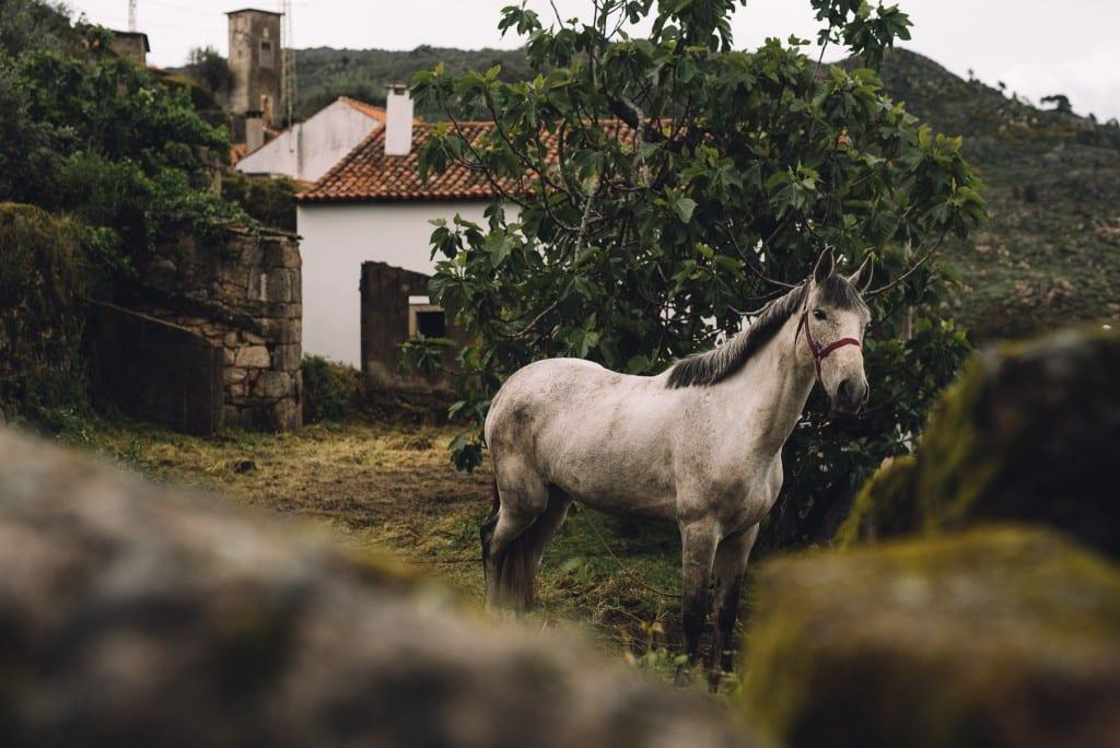 Paarden centro de portugal