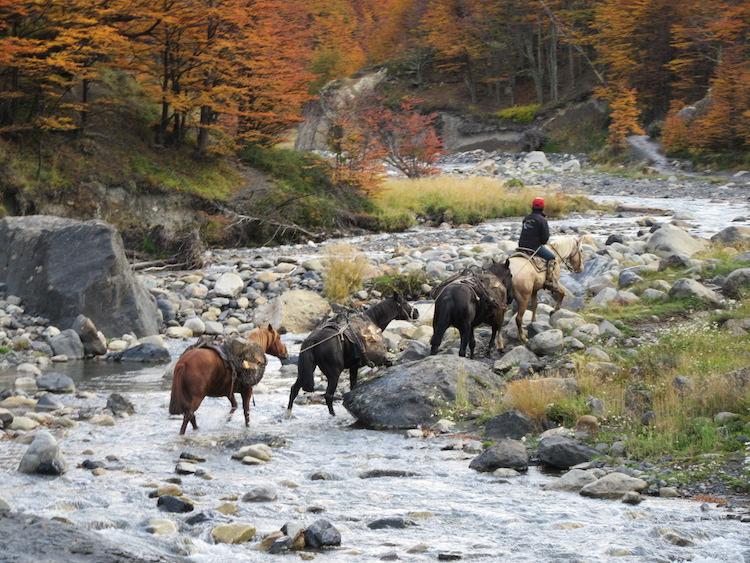 Paarden torres del paine w-circuit patagonie