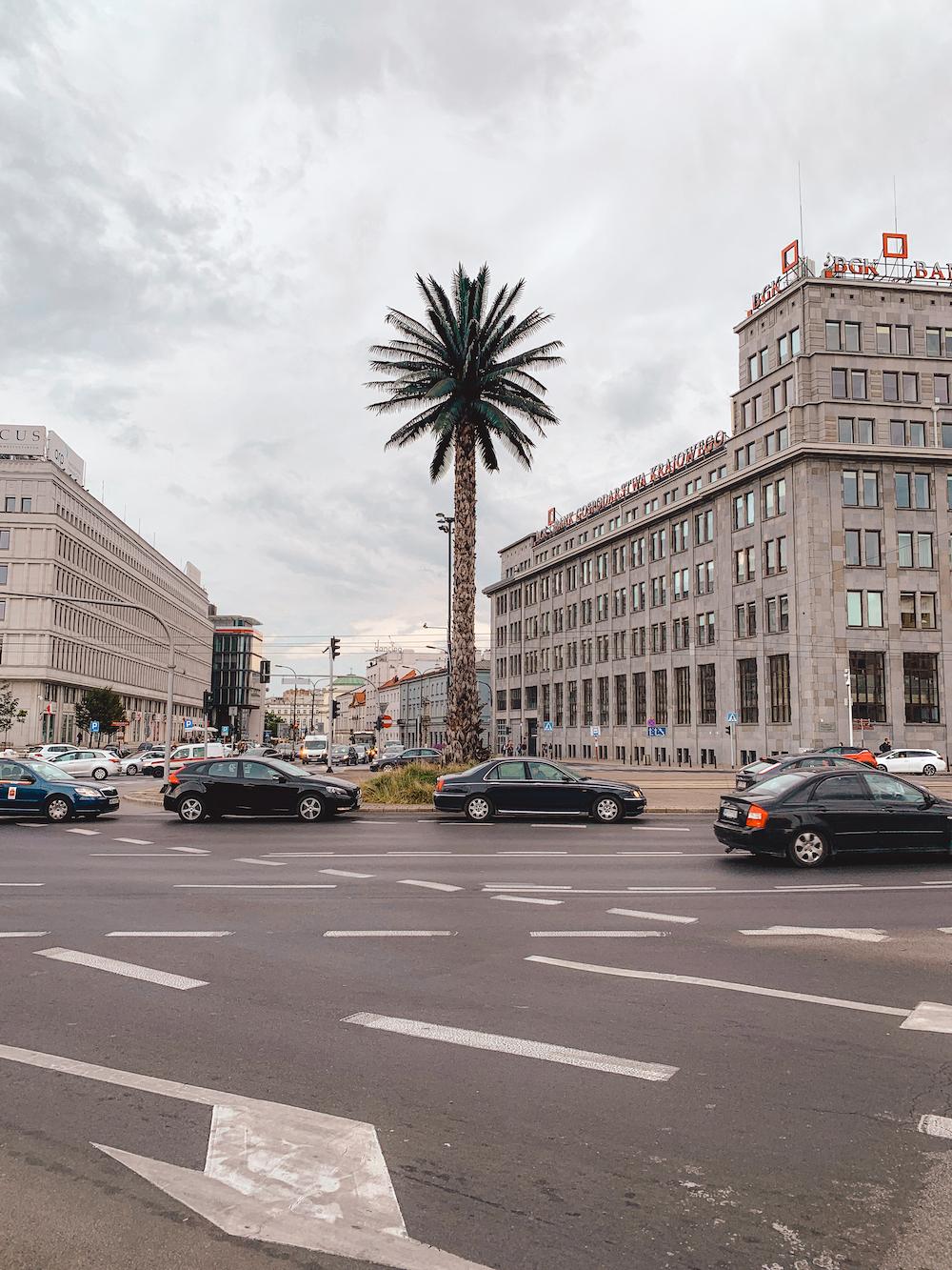 Palmboom van Warschau