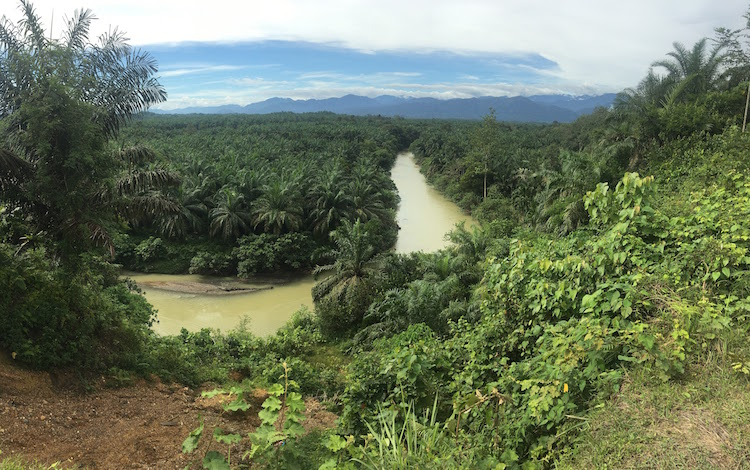 Palmolieplantages jungle sumatra