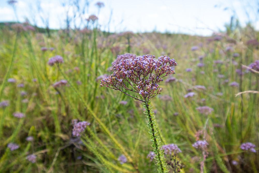 Panoramaroute zuid afrika The Pinnacle bloemen-0272