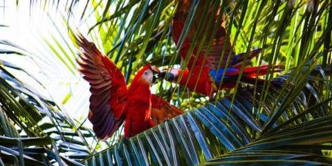 Pantanal Brazilie
