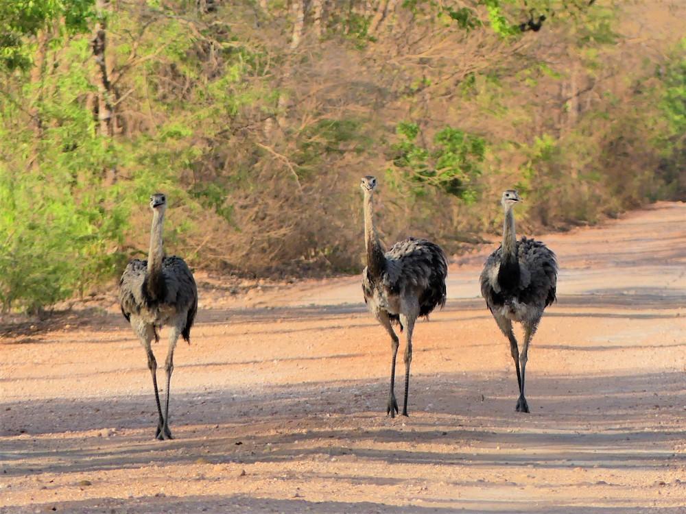 Pantanal Brazilie dieren