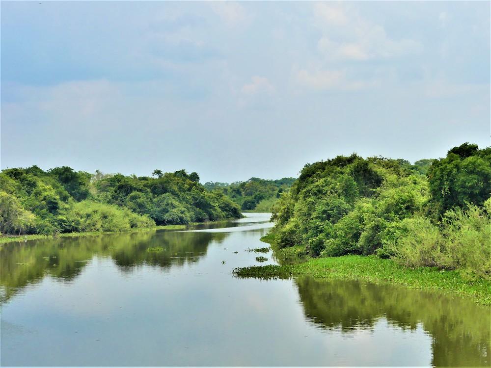 Pantanal natuur brazilie