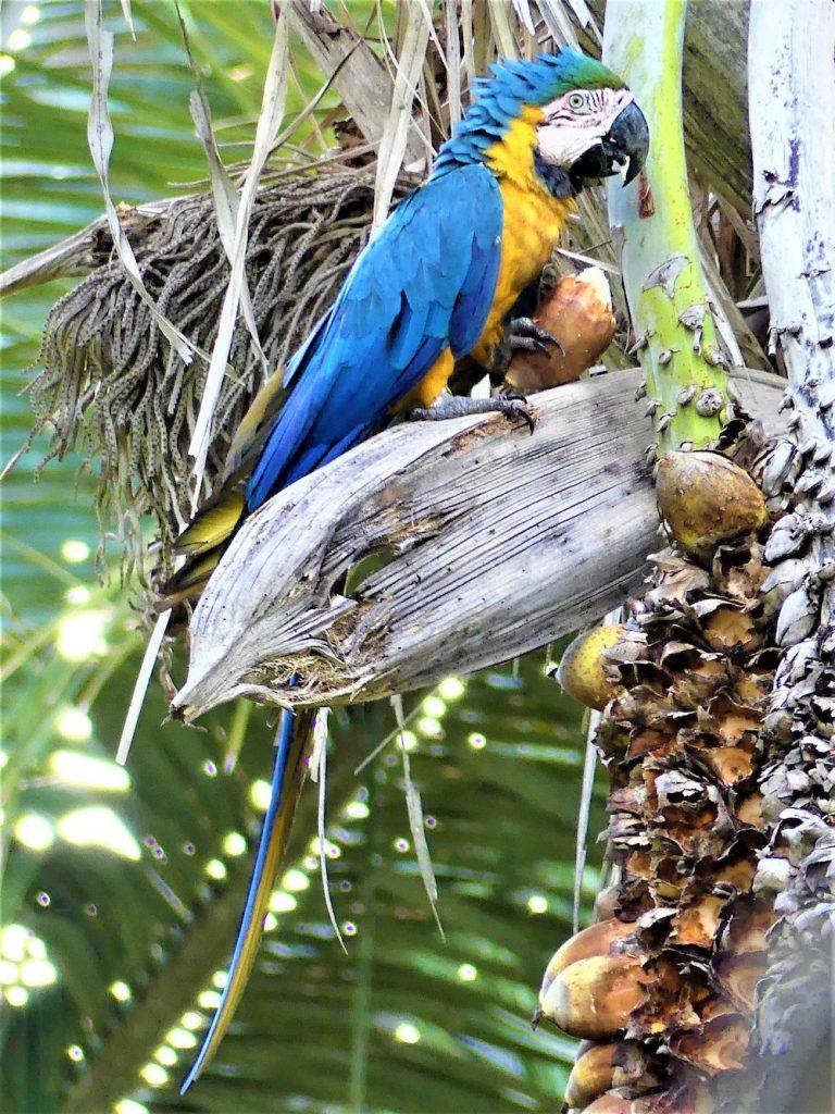 Pantanal papegaaien brazilie